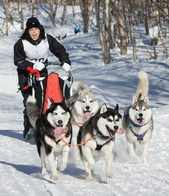 Musher- sled dogs